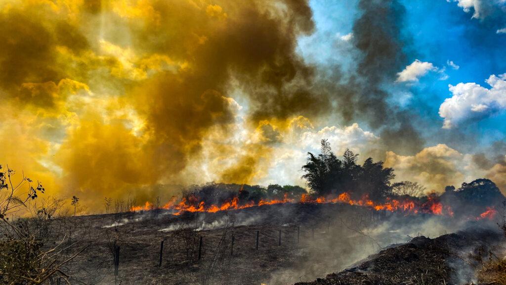 burns in Rio Branco no Acre Foto Sergio Vale_Amazonia Real